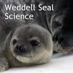 weddell seal science video podcast